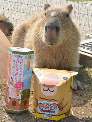 日本 千葉 觀光 景點 母親牧場
