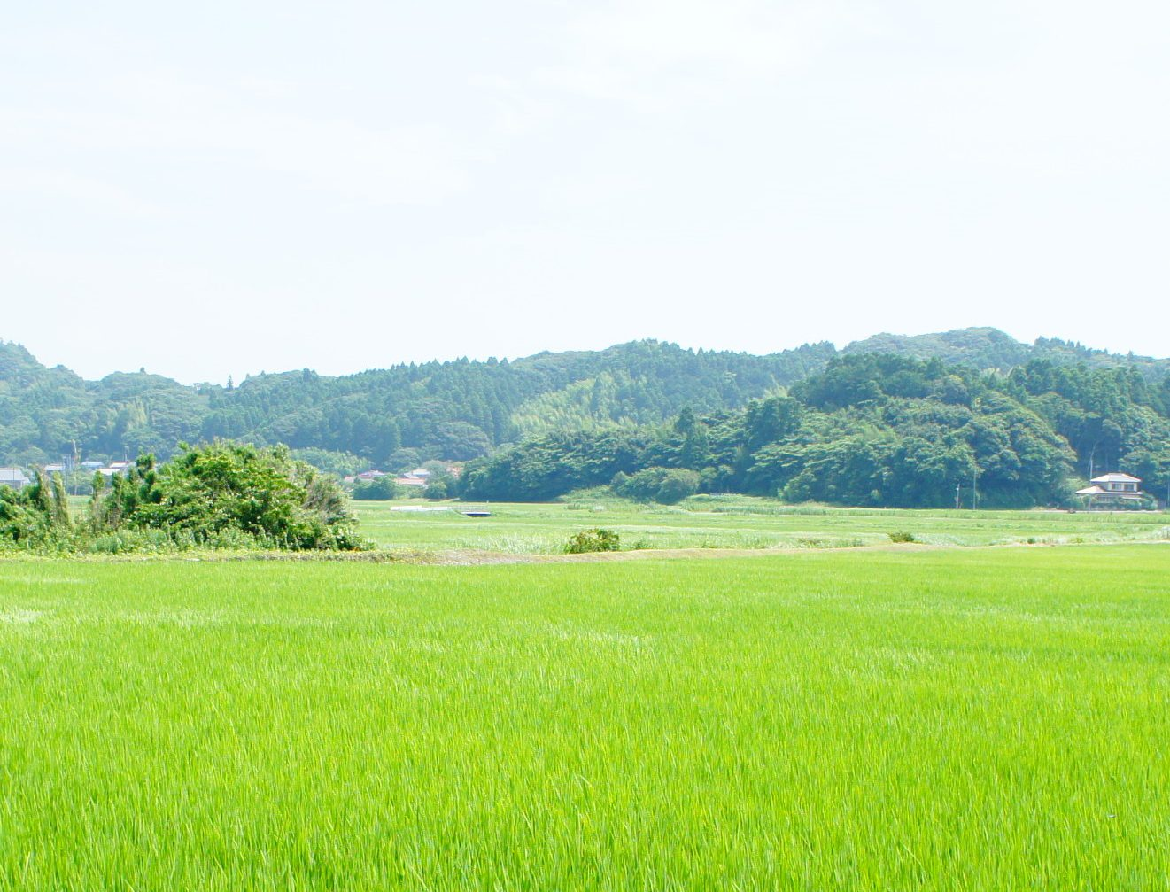 千葉県日本酒プロジェクト